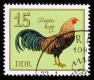Rooster Kraienkopp from the series German Cocks, circa 1979 Stock Image