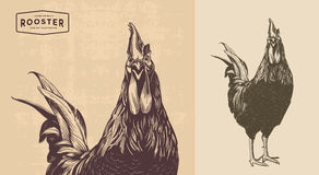 Rooster line art. Rooster, cock cockerel vintage illustration, line art Stock Image