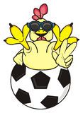 Rooster lying on the soccer ball. Rooster in sunglasses lying on a bif soccer ball and showing a gesture victory Stock Photos