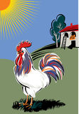 Rooster in a meadow Stock Photos