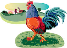 Rooster in a meadow. Stock Photo