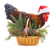 Rooster near a basket with a tree. Stock Image