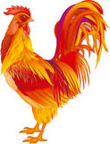 Rooster red-orange Royalty Free Stock Photography