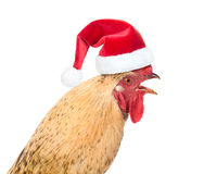 Rooster in red santa hat - a symbol of the Chinese New Year 2017 Royalty Free Stock Images