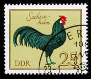 Rooster Saxony cock from the series German Cocks, circa 1979 Stock Photos