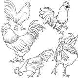 Rooster Set royalty free illustration