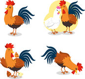 Rooster set 2. Rooster Set, with Standing rooster, Rooster with Hen, Rooster with Chicken and eating rooster. Vector illustration cartoon Stock Photography