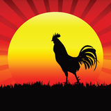 Rooster Silhouette. Rooster Silhouette for input text on Background sunrise Royalty Free Stock Photography