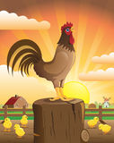 Rooster singing. Farmhouse at dawn with a rooster crowing and his chicks Stock Photography