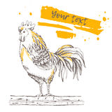 Rooster standing on a tree branch Stock Photography