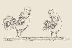 Rooster standing on a tree branch Royalty Free Stock Photos