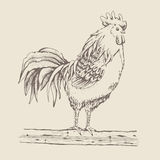 Rooster standing on a tree branch Stock Photos