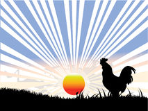 Rooster ,sun and  black grass Royalty Free Stock Photography