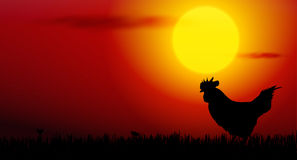 rooster on sunset Royalty Free Stock Images