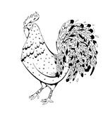 Rooster symbol 2017 by the Chinese calendar. Modern illustration for printing on fabric, clubs, flyers, advertising, calendar. Cock with elements zentagl Stock Photos