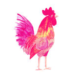 Rooster symbol 2017. Watercolor print . Rooster symbol 2017. Bright red Watercolor illustration. Fashionable print on t-shirts, bags, cases for smartphones Royalty Free Stock Photos