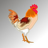 Rooster vector farm cock chicken illustration animal bird poultr. Y design Stock Images