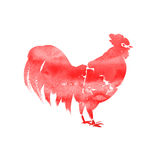 Rooster watercolor illustration isolated on a white. Background Stock Photos