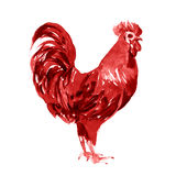 Rooster watercolor illustration isolated. On a white background Royalty Free Stock Photos