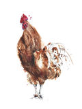Rooster watercolor painting isolated on white background