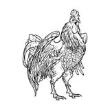 Rooster on white background. Concept drawing for year of rooster 2017. Crowing Cock - Symbol of New Year 2017. Linear hand drawing isolated on white background Royalty Free Stock Image