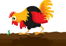 Rooster and Worm Royalty Free Stock Image