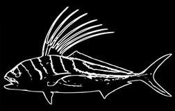 Roosterfish удя на черной предпосылке бесплатная иллюстрация