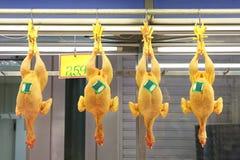 roosters Royaltyfri Fotografi
