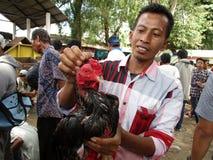 roosters Royaltyfri Bild