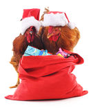 Roosters with a bag of gifts. Stock Image