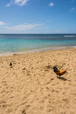 The roosters on the beach in Kauai Royalty Free Stock Photography