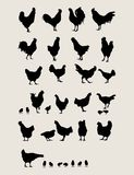 Roosters and Chicken. Silhouettes Set royalty free illustration