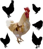 Roosters collection Royalty Free Stock Photography