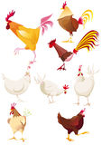 Roosters and hens on one page Stock Photography