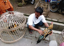 Roosters. Merchants selling roosters in an animal market in Sukoharjo, Central Java, Indonesia Royalty Free Stock Images