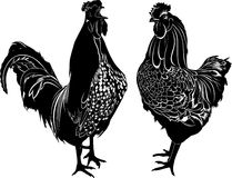 Roosters Stock Image