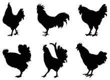 Roosters silhouette Royalty Free Stock Photography