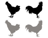Roosters silhouette Stock Photo