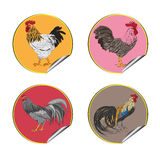 Roosters stickers Stock Photos
