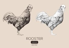 Roosters vector hand-drawn illustration Royalty Free Stock Photography