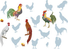 Roosters on white collection Stock Images
