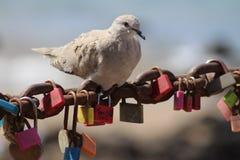 Roosting ή μετενσάρκωση στοκ φωτογραφία με δικαίωμα ελεύθερης χρήσης