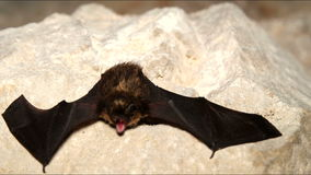 Roosting bats in the cave. stock video footage