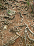 Root. Floor in forest in tirol Stock Image