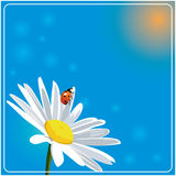 Root background with camomile. Root vector background with camomile Stock Image