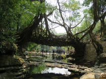 Root bridge at Meghalaya. Root bridge over the Thylong river is in Nohwet village in Meghalaya India which is 180 years old Stock Image
