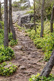 Root covered forest path, East Sooke Regional Park near Victoria Royalty Free Stock Images