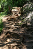 Root-covered Path. Root covered path in Princeville, Kauai Stock Photography