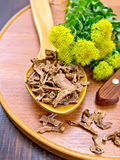 Root dry of Rhodiola rosea with knife on board Royalty Free Stock Photo