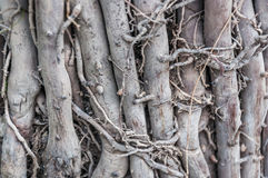 Root in earth Royalty Free Stock Photos